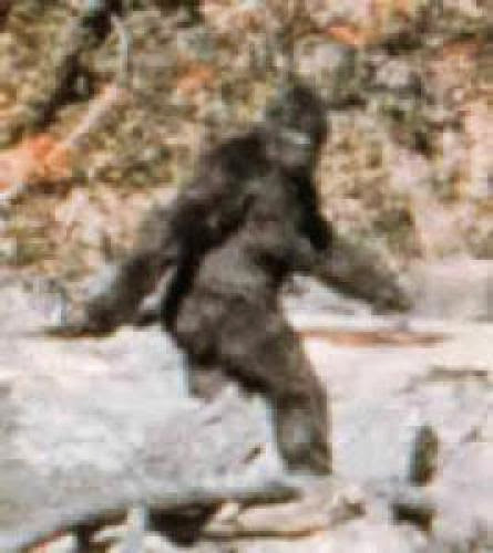 Breaking News Bigfoot Found In North America Updated
