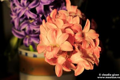 flori de primavara - zambile
