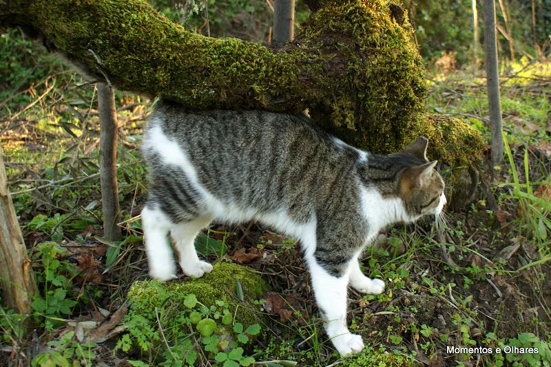 Gato, Inverno em Póvoa Dão