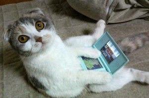 แมวมอง.jpg