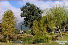 華山觀止生態池