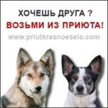 Приют для собак в Красном Селе
