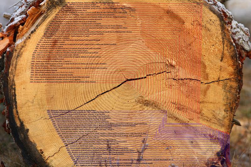 copac molid inele padure Covasna istorie evenimente sec XX