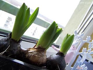 Wiosna, wiosna, wiosna ach to Ty!