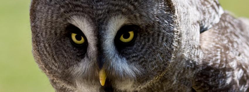 Baykuş bakışı kapak fotoğrafları