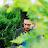 SYED SHAFQAT Gilani avatar image