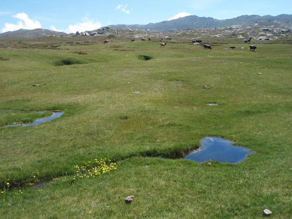 Repos aux pozzines du ruisseau de Frauletu
