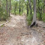 Steeply uphill trail on the Wallarah Pennisula (388637)