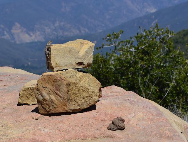 lizard on a cairn