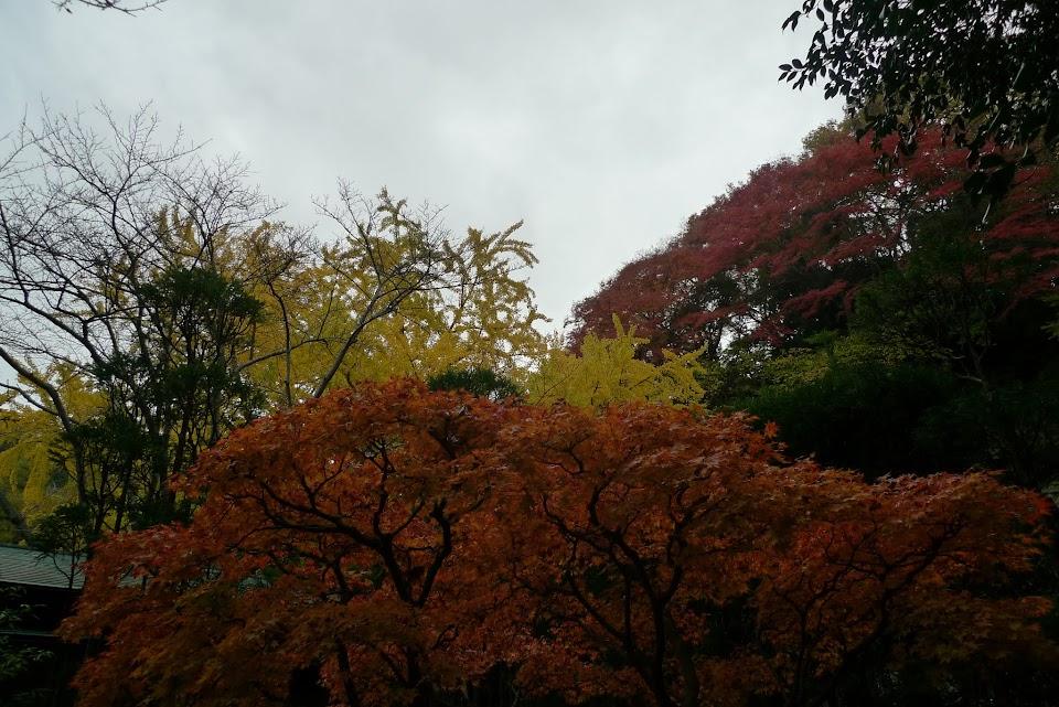 kamakura automne
