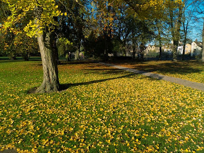 Lawn with fallen golden leaves