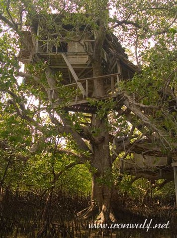 Post image for Tulapos Marine Sanctuary and Mangrove Tree House