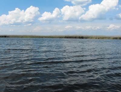 Delta Dunarii. Peisaj cu stuf