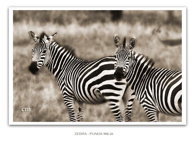 chris martin photography - Tanzania