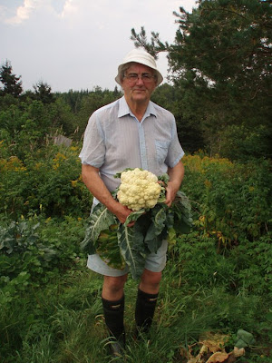 David Orton holding a large cauliflower in his garden
