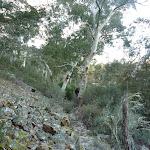 Rockfall on the Pallaibo Track near Thredbo River (302665)