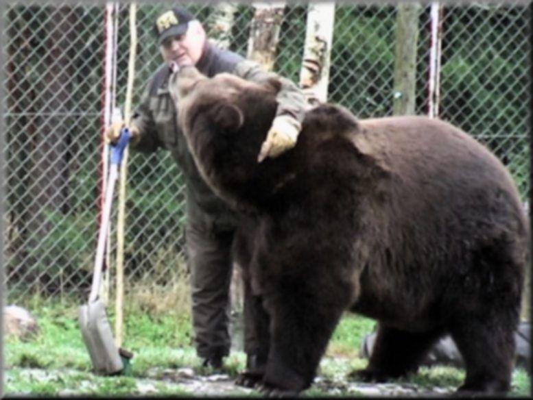 Urso pardo vs Urso polar - Página 2 9dd6ecc01b042475