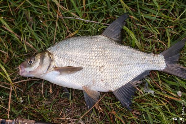 це єдина нормальна рибка за два дні