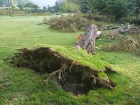 台風18号の影響でシッコゴ公園の木倒れる