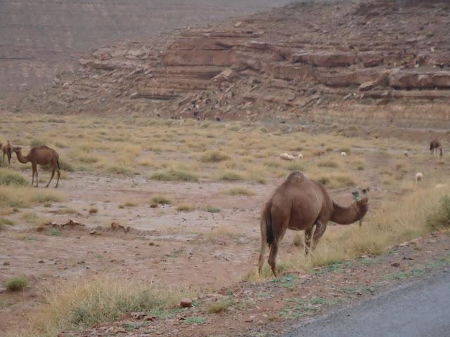 Marrocos 2011 - Página 2 DSC03434