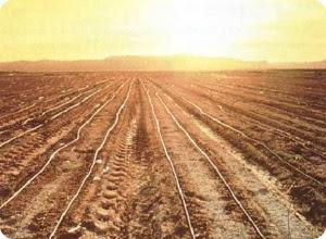 Аграрная политика Правительства Тверской области