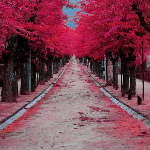 MELVONIA BOUWER's profile photo