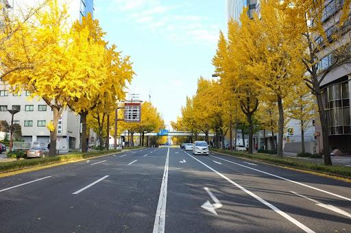 名古屋桜通のイチョウ並木