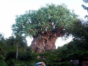 Disney 2012: Day 4 - Animal Kingdom / Magic Kingdom