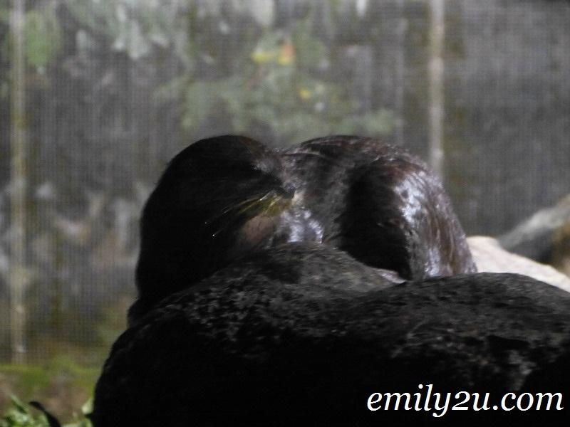 Taiping Zoo Night Safari