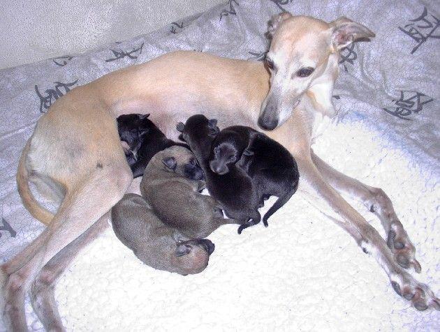 Mandy & alle puppies van het F-nest