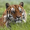 Tiger Hwang