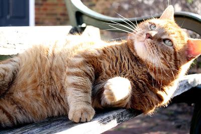 Cat in Rye