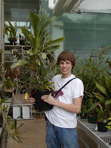 Растения из Тюмени. Краткий обзор 2571922556_c1c828b499