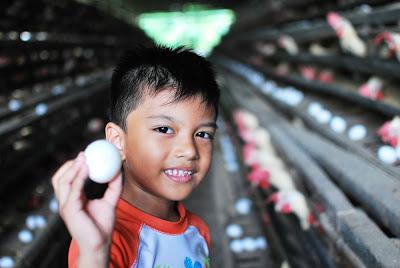 Zach Egg Model