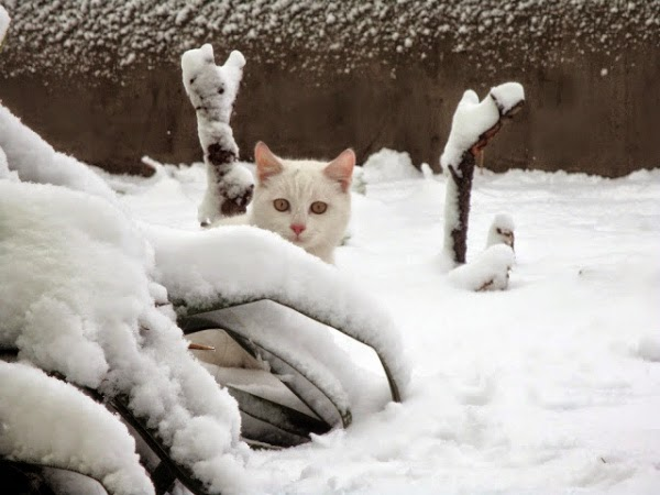 Кот выглядывает