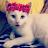 Zahra Alribei avatar image