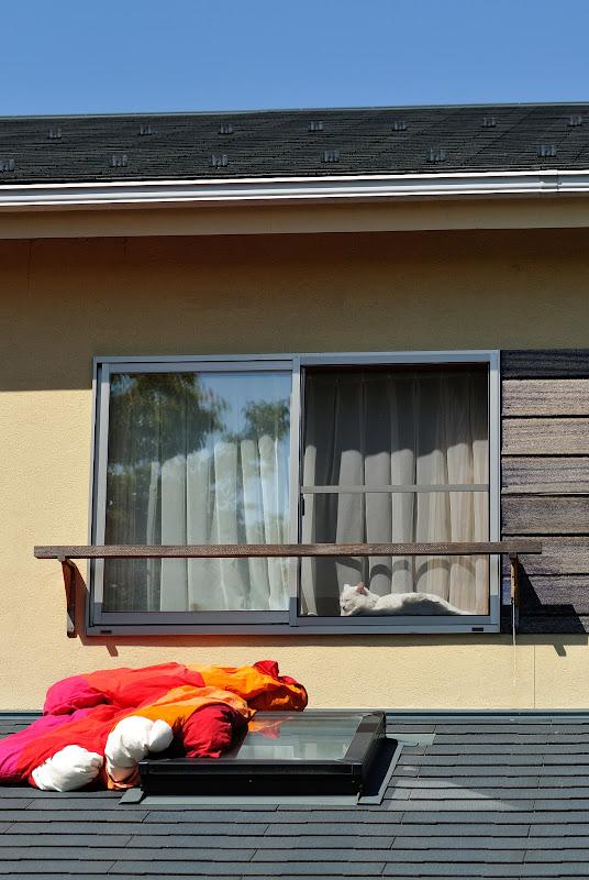 ikkunakissa