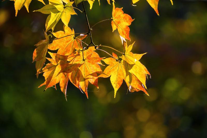 昭和記念公園 日本庭園 紅葉 写真9