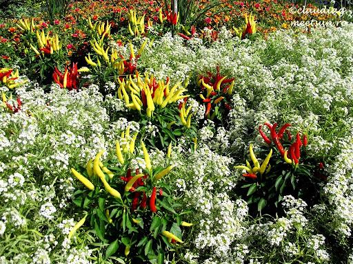 la gradina botanica flori si ardei