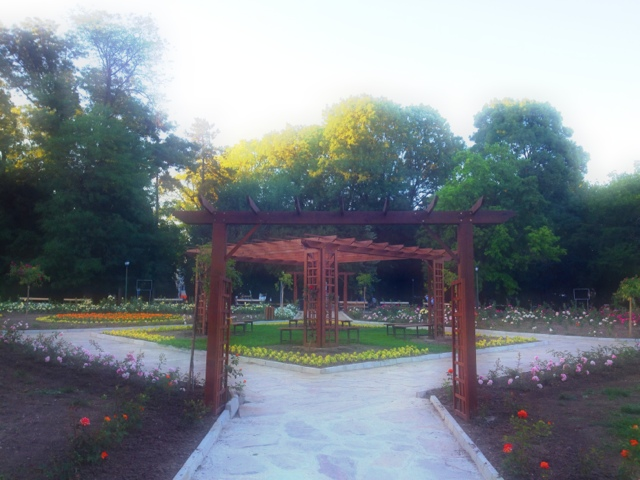 Picture of the rose garden in the Dobrich city park. The photo is taken in Dobrich Bulgaria, June 2013.