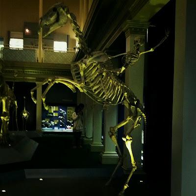 Australian Museum, 6 College Street, Sydney NSW 2010, Australia