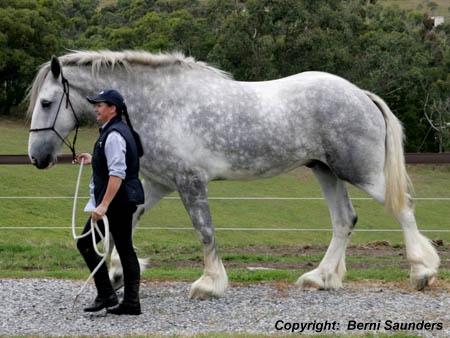 worlds largest horse ever luscombe nodram latest car