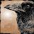 Aradia Raven avatar image