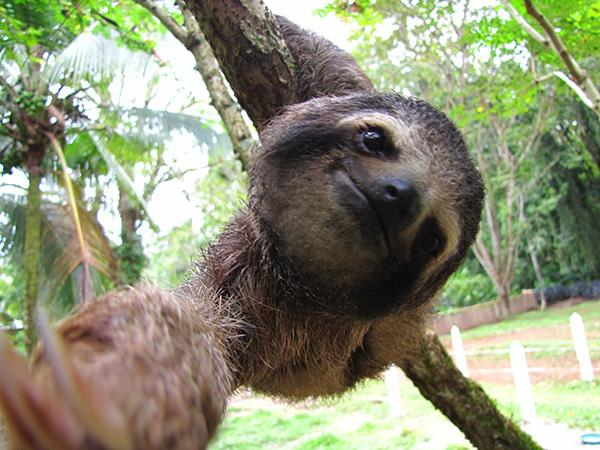 Cool Animals Pictures Sloth Rare And Different South