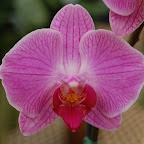 Flowering Tropicals