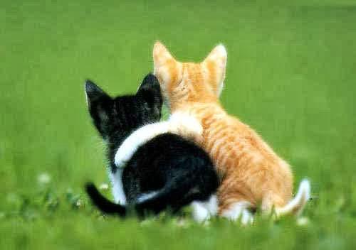 Kucing berpelukan