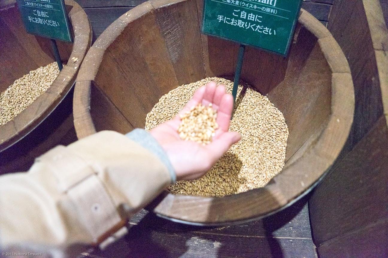 原料になる二条大麦
