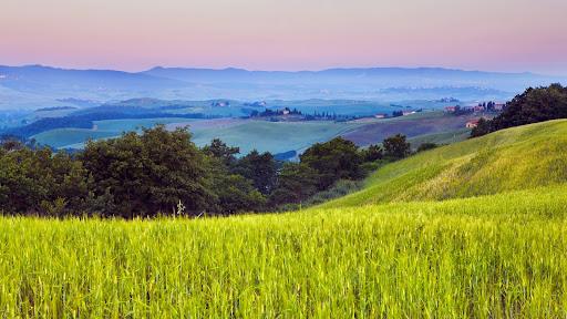 Cornfield, Volterra, Tuscany, Italy.jpg