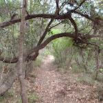 Continuing through the bush (117229)