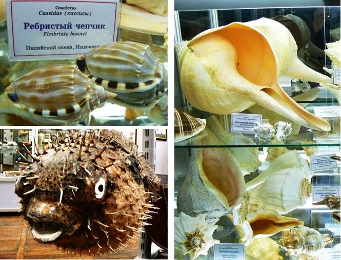 Коллекция раковин и кораллов